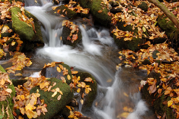 Great Smoky Mountains National Park - Fall 2006